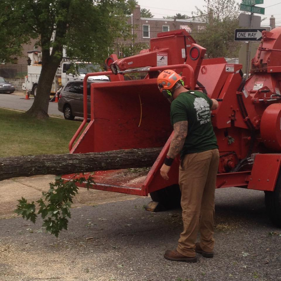 Hire a Professional Arborist in Sussex County