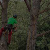 Regular Tree Maintenance