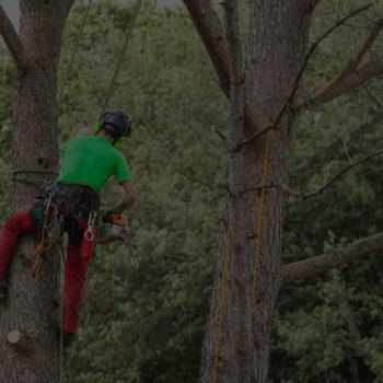 Regular Tree Maintenance