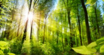 Choosing a Tree For Your Yard   Helpful Tips