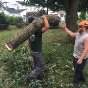 treemendous tree care crew