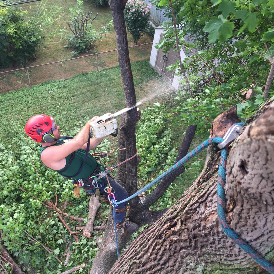 Tree Professionals That Take Care of Your Tree in New Castle County