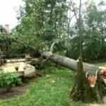 tree removing service