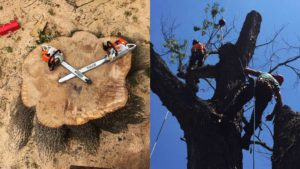 About us - tree services