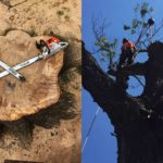 Residential and Commercial Tree Care