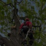 Tree Analysis Services in Delaware