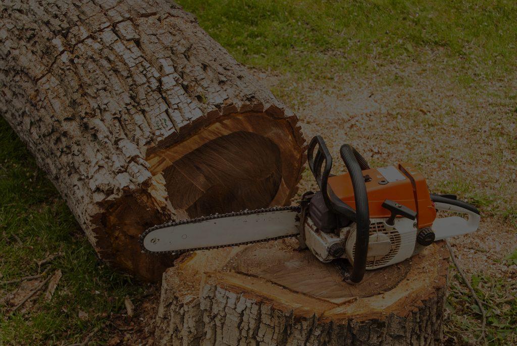 Tree Removal Delaware